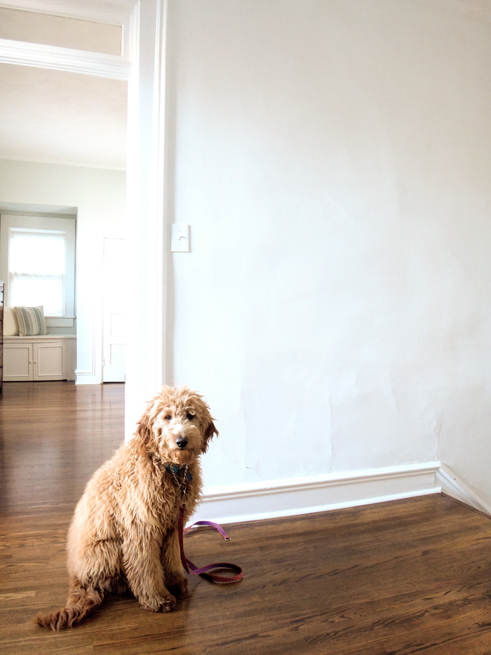 picture bedroom golden doodle