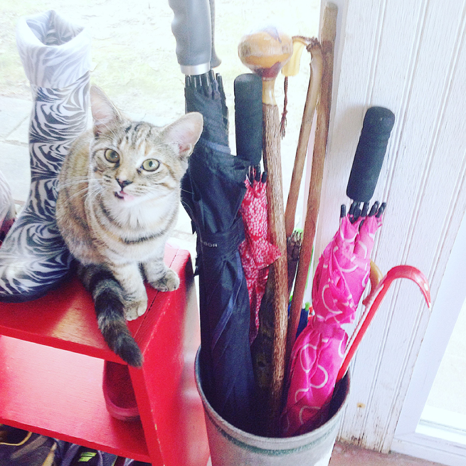 picture umbrellas and kitten